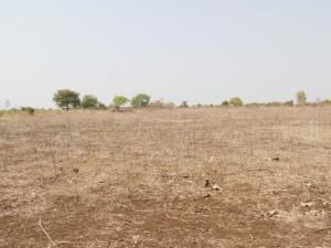 dryfield