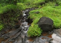 spring water in rainy season